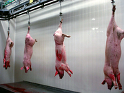 Убой свиней и крс. Оборудование для цехов убоя
